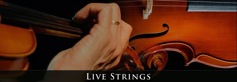 Palette Productions-Jeff Silverman- Live Strings